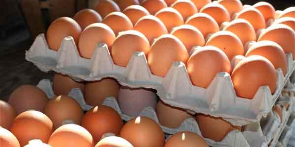 Œufs contaminés par du fipronil : une fraude scandaleuse mais sans risque avéré pour le consommateur