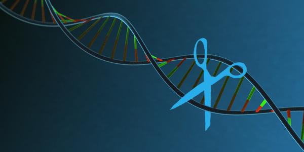 Agir sur l'ADN