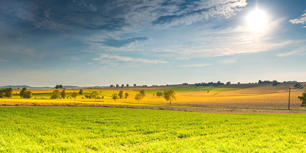 L'usage du glyphosate est-il devenu indispensable pour l'agriculture contemporaine ?