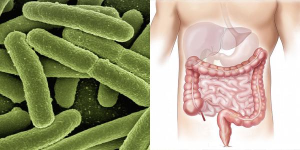 Ces microbes qui nous font vivre