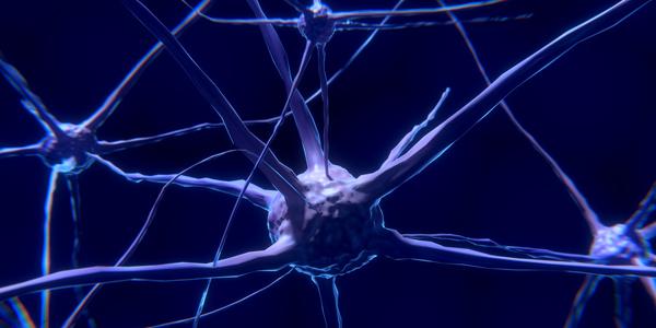 Imagerie de l'architecture fonctionnelle de l'encéphale : du neurone au cerveau