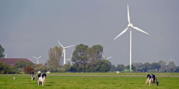 Les éoliennes peuvent-elles être mises en cause dans les problèmes ayant affecté deux élevages bovins en Loire-Atlantique ?