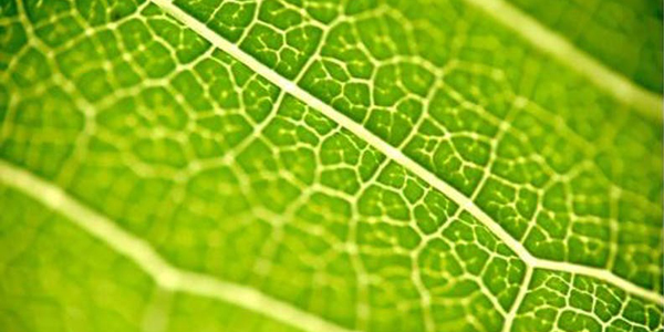 Bioéconomie, les enjeux du carbone vert !