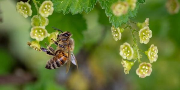 Hommes et abeilles