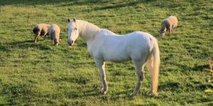 La maladie de Borna des chevaux et du mouton