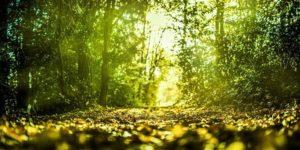 Symbiose et coopération pour une forêt résiliente
